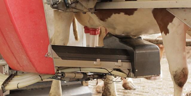 Saubere Kühe Keydollar Gülle Separator